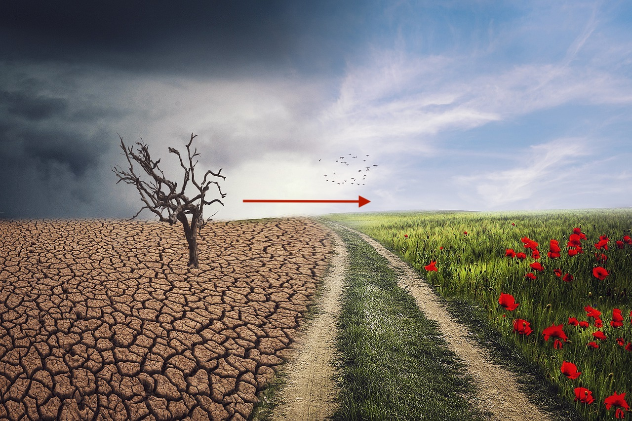 barren field with dead tree, and arrow pointing across a dirt road to a grassy field with poppies